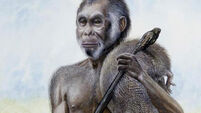 'Hobbit' species of hominids were less than 1m tall