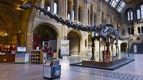 New find reveals secrets of T-rex