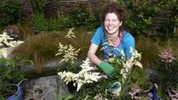 Horticultural hero for this month is the charming, Chelsea Gold winner, Mary Reynolds
