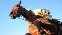 Bellshill and Shaneshill keep Willie Mullins' Closutton bandwagon rolling