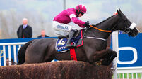 Don Cossack's racing career  in jeopardy after tendon injury
