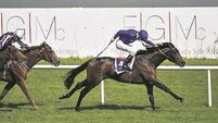 Jim Bolger sweet on Moonlight Magic for Epsom Derby