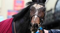 US Army Ranger out of Irish Derby after scoping badly