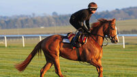 Coolmore on classic trail at Newmarket
