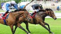 Ground an issue for Aidan O'Brien stars