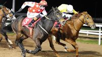 Seven up for Taglietelle at Dundalk