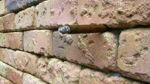 Can you figure out what's stuck in this brick wall?