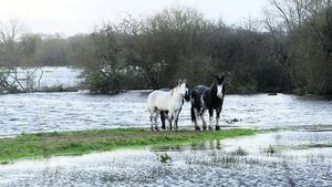 Shannon taskforce among Government measures to deal with floods crisis