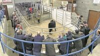 VIDEO: The IFA needs 'a new clean board to start from scratch' say farmers at Skibbereen Mart