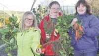 Down Syndrome Cork hopes to begin work on new market garden project