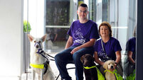 Charities seek update to laws concerning 'assistance dogs'