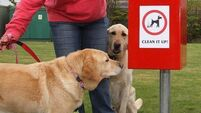 Audible dog poo alarms to be installed in Cork City