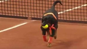 These rescued dogs are now happily collecting balls at a tennis tournament