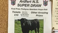 A bull trumps Nidge and All Ireland tickets in Kerry school raffle