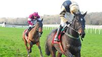 Black Hercules can get chasing career off to good start at Navan