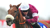 Alpha Des Obeaux a star of Irish racing waiting to happen