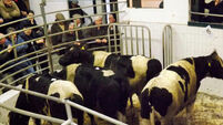 Buyers get more bang for their buck at the marts as supply of cattle fat off the grass dries up