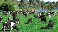 Farms achieve only half of grass yield potential