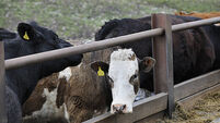 Mixed farmer responses to dairy and pig farm supports