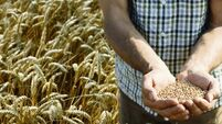 Global grain prices continue to struggle