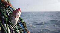 Study finds EU fish catches could treble if stocks rebuilt and managed sustainably