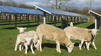 Councillors want solar farm ban until guidelines drawn up