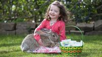 Online and in the shops: Easter egg hunts