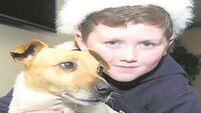 Meath family reunited with dog six months after he went missing
