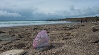 Check out the jellyfish on this West Cork beach