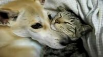 These cuddling cats and dogs are very cute