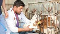 Government urged to keep regional veterinary laboratories