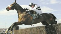 Obituary: Moscow Flyer - 'He was the horse of a lifetime'