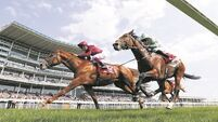 Wings Of Desire still in St Leger mix