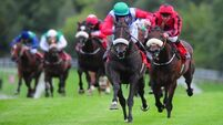 Killarney Races: Syndicate having the Craic and keeping a father's memory alive