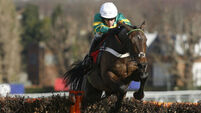 Cheltenham countdown: Is Buveur D'Air the right Champion Hurdle favourite?