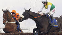BHA: Wobble symptoms not linked to death of Many Clouds