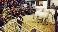 Cattle mart report: Macroom's charity event demonstrates true meaning of the season