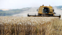 Harvest to salvage for many growers