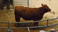 Surprise for herdowners who found their cattle were 'trade suspended' at marts