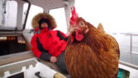 Meet the man who sails around the world with his pet hen
