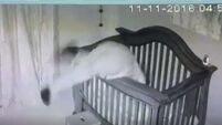 See what happens when a 'vertically challenged' granny tries to put a sleeping baby into a big cot