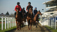Five horses to lay at Cheltenham Racing Festival