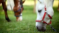 Scientists record first cases of equine virus in Ireland