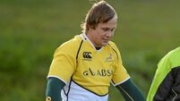 Botha will add 'strength to Munster's backrow options'