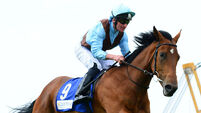 Aidan O'Brien's Ascot may not be as royal as other years