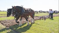 Decision on whether Ploughing Championships can go ahead expected in early June
