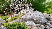 Fall in love with stone huggers: Reasons to grow alpine plants