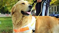 'When I needed a hand, I found a paw': Clients share stories ahead of Guide Dog Day