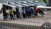 Greyhound racing 'at a loss' as horse industry gets green light