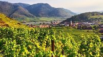 Wine with Leslie: A focus on Austria, a wine producing country that is often overlooked